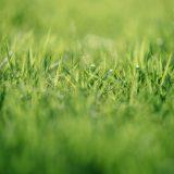 Den perfekta gräsmattan